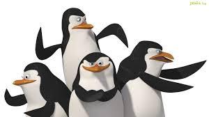 pingwiny_4